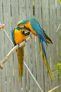 friendly birds